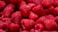 Red Raspberries video