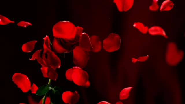 Red rose, Slow Motion video