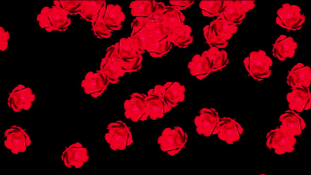 Red roses falling with Alpha Channel video
