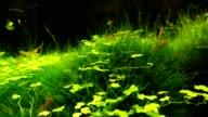 Red shrimp underwater video