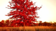 Red tree video