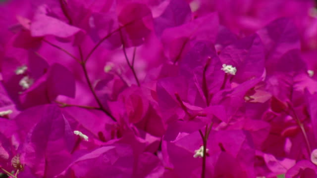 Red violet flowers nature background video