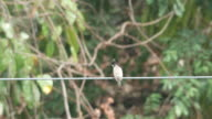 Red-whiskered bulbul resting on the electric line video