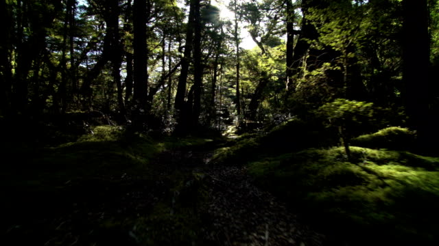 Redwood Forest in Fjordland New Zealand video