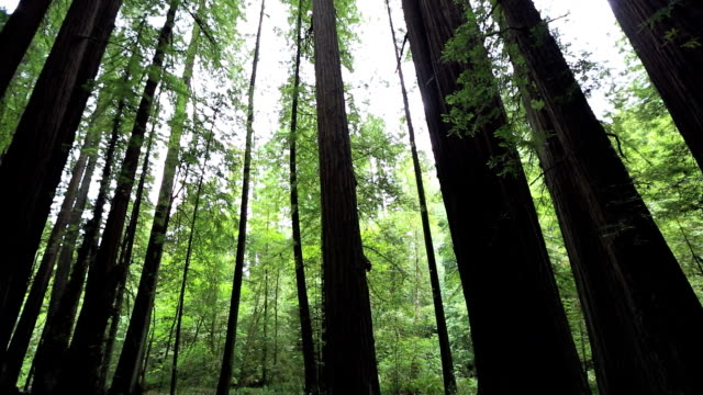 Redwood National Park video