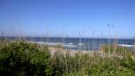 Reeds in Front of Ocean video