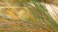 HD: Reeds video