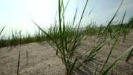 Reeds video