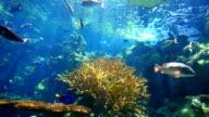 Reef - HD Video video