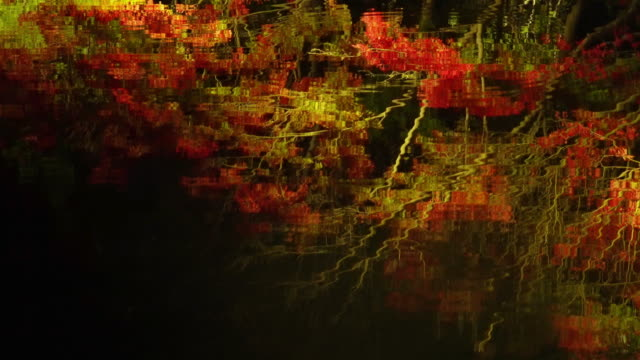 Refections of autumn leaves at Nabana No Sato, Mie, Japan video