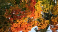 Reflection of autumn trees in the water. Autumn Landscape. 4K. video