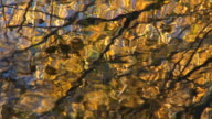 Reflection of fall leaves in pond video