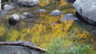 Reflection of Neon Glow Maple near river at Korankei - Asuke, Japan. video