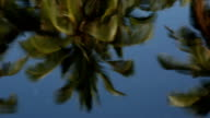 Reflection of Palm Trees in Calm Water Lily Pond video