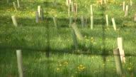 Reforestation. Tree planting. video