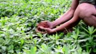 reforestation video