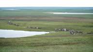 Reindeer caravan goes on the tundra. The Yamal Peninsula. video