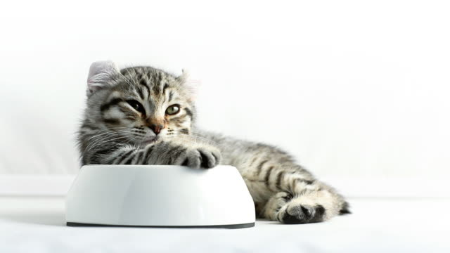 Relax Eating cat video