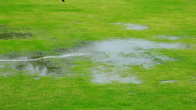 Release water into the grass. video