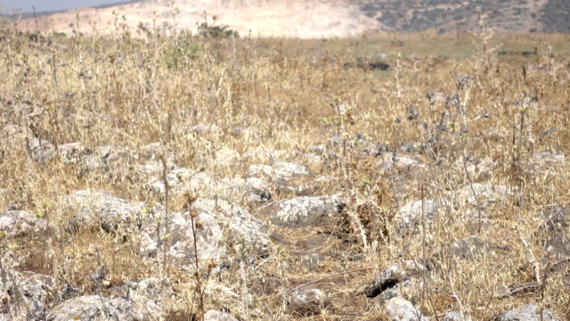 Remains of Roman Road in Dry Field in Israel video