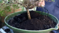 Replace the soil in bonsai pots video