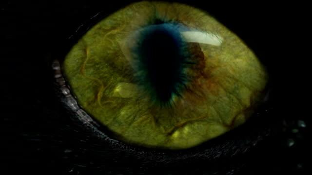 reptile eye video