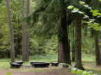 rest area in coniferous forest. empty benches wait for tourists. video