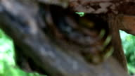 Reticulated Python:Shift focus shot. video