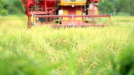 Revolving reel of a combine head cutting rice, Slow motion video