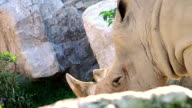 rhino close up video