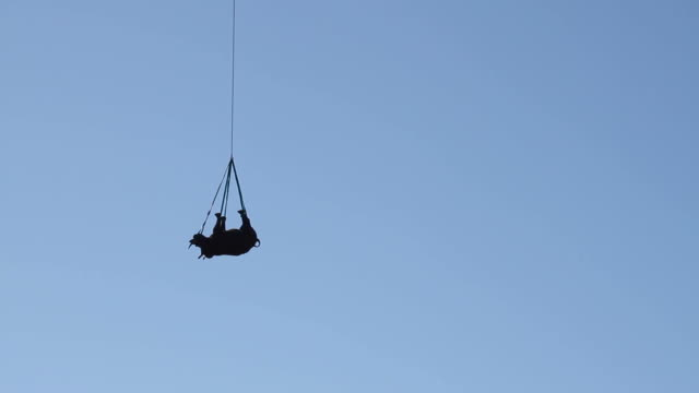 Rhino relocated by helicopter video