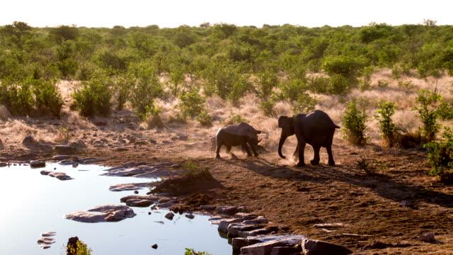 WS Rhinoceros Fighting With An Elephant video