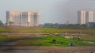 Rice farmers work as large buildings are constructed on rural land video