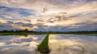 Rice field and water reflection day to sunset Time-lapse. video