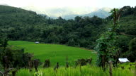 Rice field on the mountain video
