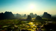 Rice fields at sunset video