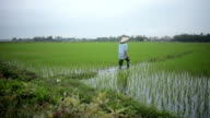 Rice Fields - Farmer video