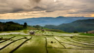 Rice fields on terraced of Pa Pong Pieng, Mae Chaem, Chiang Mai, Thailand video