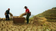 Rice Harvest in China video