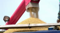 Rice harvest video