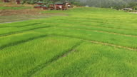 Rice paddy from above video