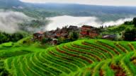Rice paddy in Longsheng video