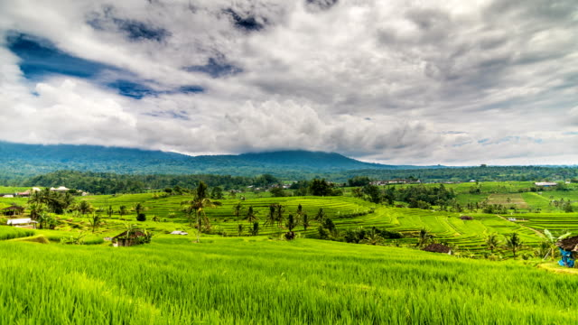 Rice terrace and mountains time lapse video