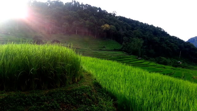 Rice Terraces in Northern of Thailand video