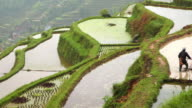 Rice terraces in spring video