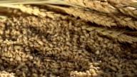 Rich Harvest of Grain video