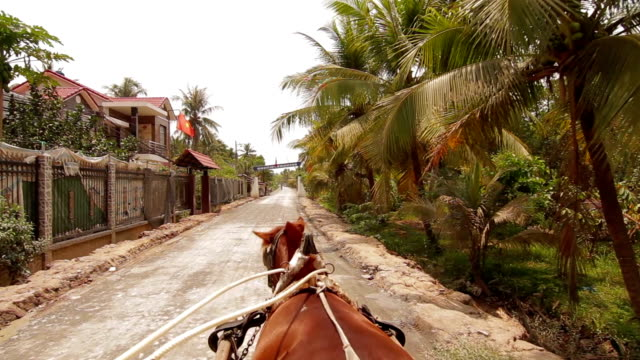 POV Ridding horse Mekong Delta Vietnam video