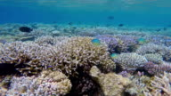 Ride on exotic coral reef - Maldives video