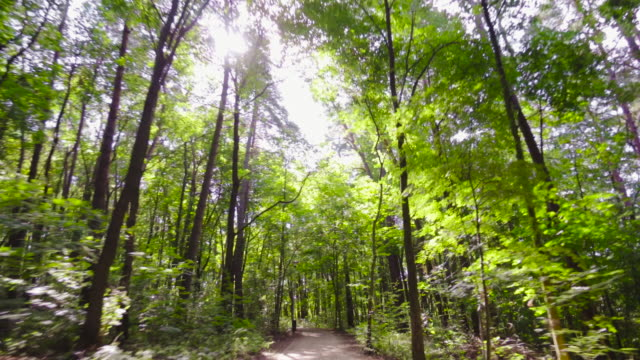 Riding bicycle in the forest alley video