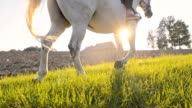 SLO MO Riding horse along a cultivated field video